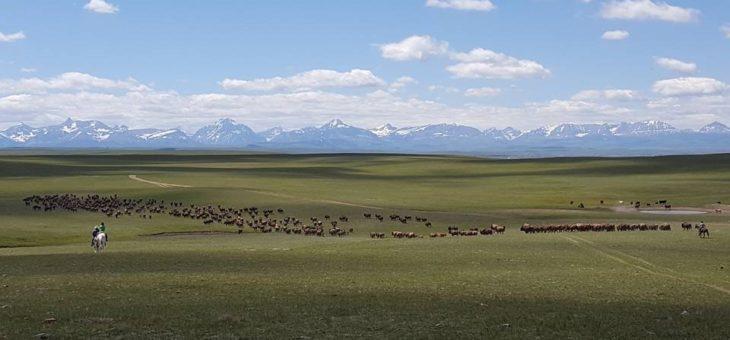 Chapter 2: Buffalo, Bears Ears, Black Mesa
